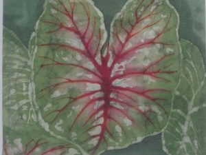 Karen Wood: Caladium