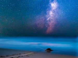 Mary Lundeberg: Milky Way Turtle